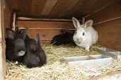 image of rabbit hutch  - Breeding rabbits on a farm in small boxes  - JPG