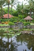 Beautiful tropical outdoor garden with palm trees and pond of water lilies.