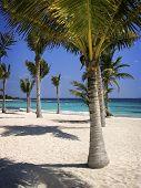 Palmtrees_Mayanriviera