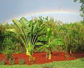 Tropical Garden With Rainbow