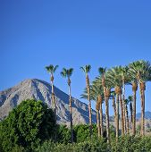 Paisaje de Palm Springs