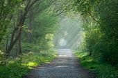 Countryside track and sunbeams