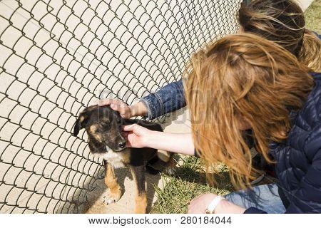 poster of Outddor Homeless Animal Shelter. Sad Mongrel Dog Happy Visitor Shelter. Girl Choosing A Dog For Adop
