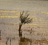 Lone Shrub On The Surface Of The Dam, Reflections On The Surface, Surface With White Flowers poster