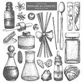 Vector Collection Of Hand Drawn Perfumes And Cosmetics Sketch. Vintage Set Of Aromatic Plants For Hi poster