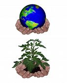 Holding Globe Plant