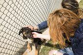 Outddor Homeless Animal Shelter. Sad Mongrel Dog Happy Visitor Shelter. Girl Choosing A Dog For Adop poster