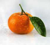 Orange Wet