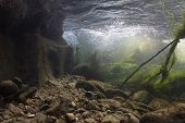 Rocks Underwater On Riverbed With Clear Freshwater. River Habitat. Underwater Landscape. Mountain Ri poster