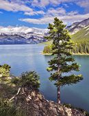 A lonely pine on abrupt coast of mountain northern lake