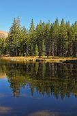 Bosque se refleja en el encantador lago superficial.