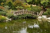 A small pond and a decorative wooden bridge in the Japanese garden in Saratoga