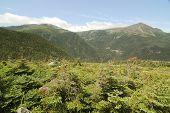 rocky mountain and shrubs