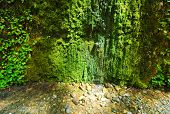green fern canyon walls
