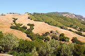 Árboles y colinas de Monte Diablo