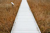 wooden boardwalk through a bog