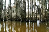 Caddo Lake cypress forest