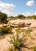 rocas y bush desierto