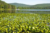 Red House Lake, hills and lily pads