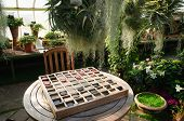 checkers in a conservatory