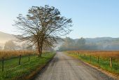 foto of cade  - Cades Cove road in fog at sunrise - JPG