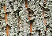 green and orange tree bark