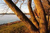 tree trunks at sunrise