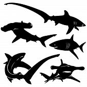 Vector Shark Silhouettes (shark Shadow, Sea Predator) poster