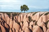 Alone tree in amazing hills in Cappadocia mountains, Turkey. Landscape photography poster