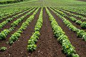 Big Crop Field