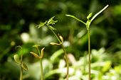 Plants Growing From Soil-plant Progress