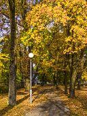 Colorful autumn fall of the leaves in beautiful park , Dubulti, Jurmala, Latvia