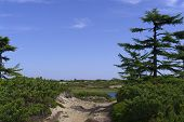image of sakhalin  - sandy road in the forest tundra landscape on a sunny day - JPG