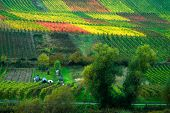 Colorful Vineyards