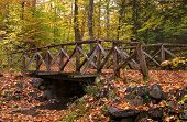 Forest Bridge In Fall