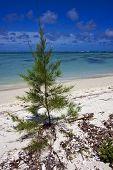Bush In Mauritius Beach