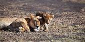 Madre y cachorros