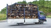 Hu�, Vietnam - Aug 4: Trailer Filled With Live Dogs Destined For Vietnamese Slaughterhouses. Dogs, poster