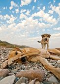 Playful Dogs On The Beach