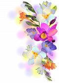 Vector Background With Gentle Freesia Flowers