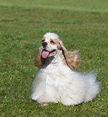 Beautiful Purebred Dog On Green Grass