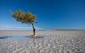 Mangrove Survivor