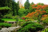 Assorted Colors Of The Japanese Garden