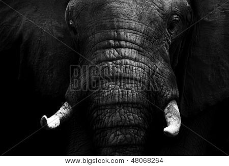 Artistic black and white elephant poster