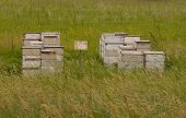 Bee boxes in meadow