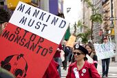 NEW YORK-MAY 25: A protestor on Broadway holds a sign that says 'Mankind Must Stop Monsanto' at the