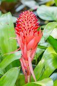 Bromeliad Flower Spike