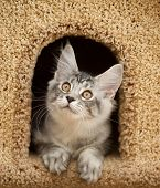 picture of peek  - kitten peeking out of the house  - JPG