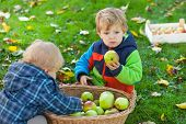 stock photo of crips  - Two little siblings in autumn garden with basket full of apples - JPG