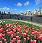 Red Tulips Prospects Of Shanghai Bund Lujiazui City Landmark Skyline poster